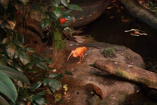 Biodôme de Montréal : Biodome - ibis