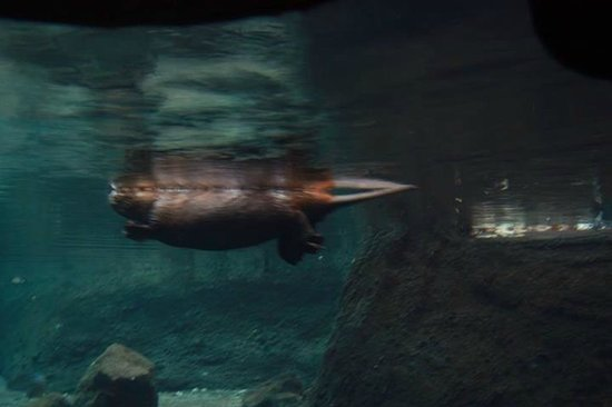 Biodôme de Montréal : Biodome - beaver