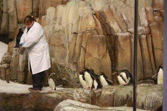 Biodôme de Montréal : Biodome - penguins