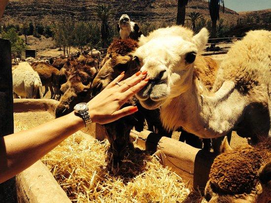 Avanti Hotel Boutique Fuerteventura: Oasis Park