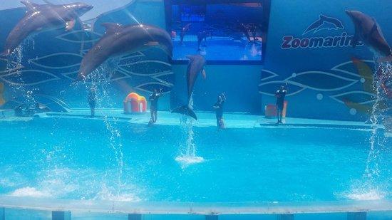 Zoomarine Algarve : Amazing dolphin show!!!