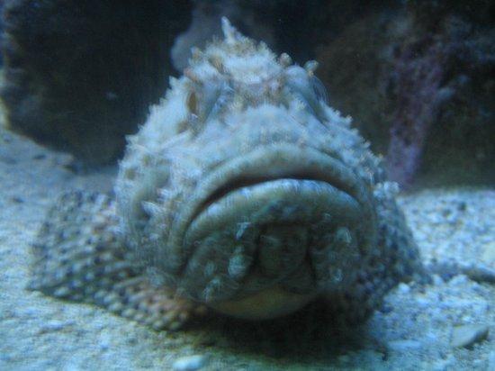 Rovinj Aquarium (Ruder Boskovic Institute): обитатель аквариума