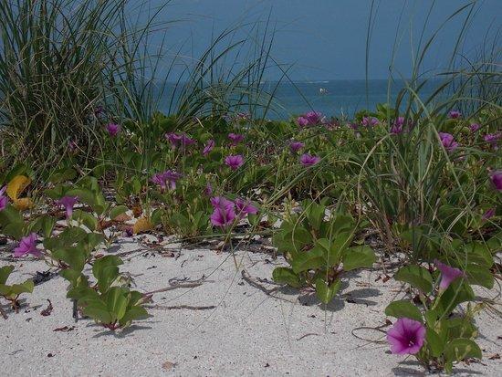 The Beachcomber : Patio