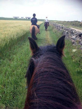 Rockside Farm : Riding on a barley field