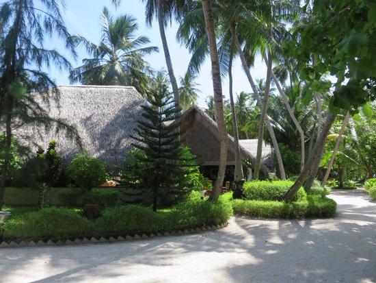 Fihalhohi Island Resort: ..