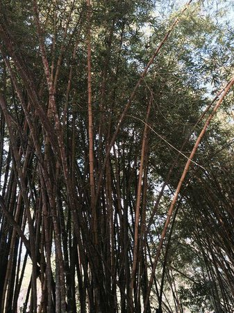 Hotel & Club Punta Leona: Beautiful bamboo around the entrance area. My picture doesn't do it justice.