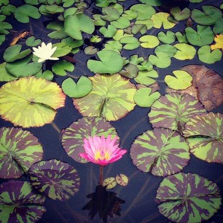 George Eastman Museum : beautiful gardens