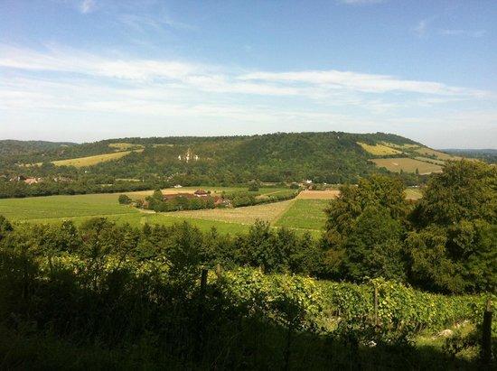 Denbies Wine Estate: Box Hill viewed from the top of Denbie's Estate
