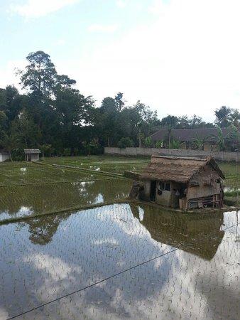 Permana Cottages : Aussicht von der Terrasse hinterm Pool