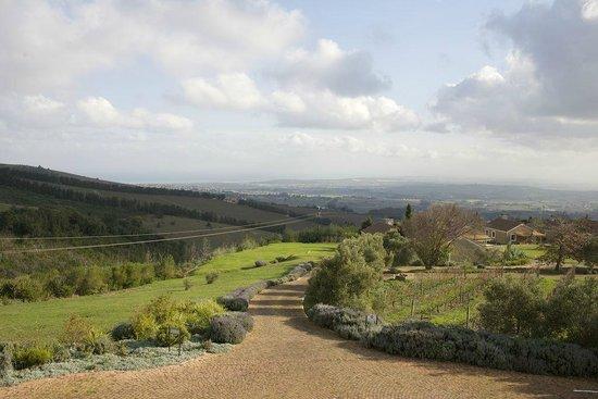 WineFairy: another beautiful view!