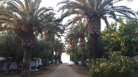 Playa Montroig Camping Resort: Calle con acceso a la playa
