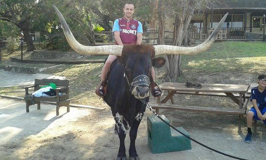 Mayan Dude Ranch: io sul longhorn