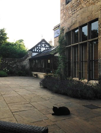 The William Cecil at Stamford: Terrace with cat