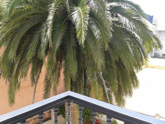 Hotel Cervantes: Palmera