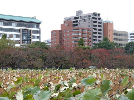 Shinobazu Pond : ...