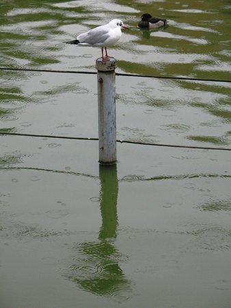 Shinobazu Pond: ...