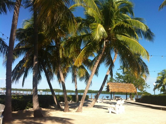 Coconut Palm Inn : more palms