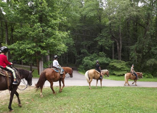 Pisgah View Ranch : off they go