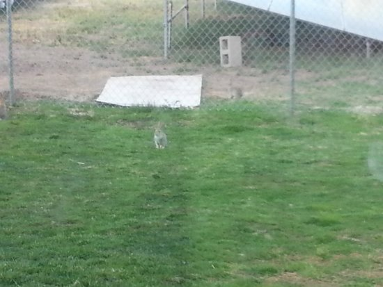 Comfort Inn - Lone Pine: Hotel east side grassy area with bunnies!