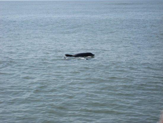Myrtle Beach Watersports Dolphin