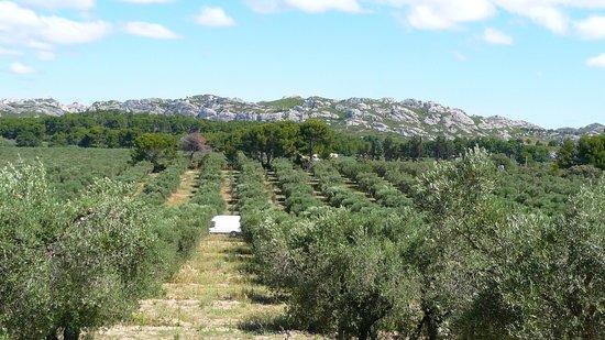 Le Mas de La Tapi: L'oliveraie vue du rocher