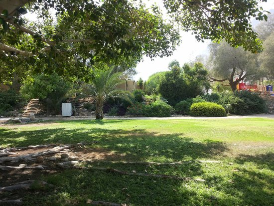 Ein Gedi Hotel : In the botanical garden of hotel