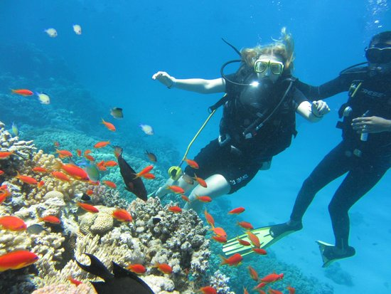 Red Sea Coral Reef Snorkeling at Ras Mohamed National Park with Lunch: Scuba Diving