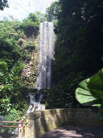 Jurong Bird Park: Man made waterfall