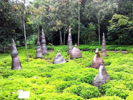 Jurong Eco Garden Singapore 2020 All You Need To Know Before