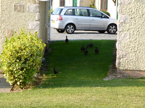 The Spa Hotel at Ribby Hall Village: Ducks wandering around the grounds.