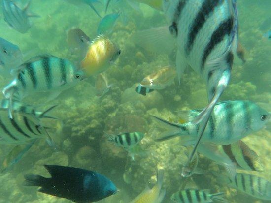Mamutik Island: Corals 1 star, fishes 3 star