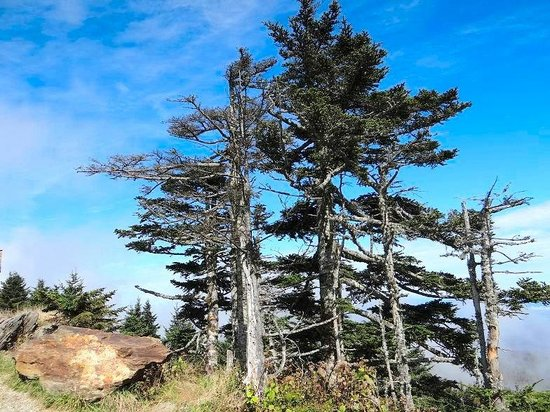 Mount Mitchell State Park: top