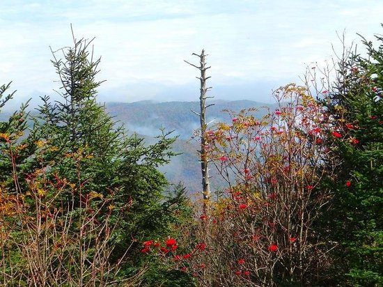 Mount Mitchell State Park: view walking to top