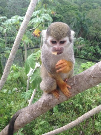 Monkey Land by Runners Adventures: stuffing its face