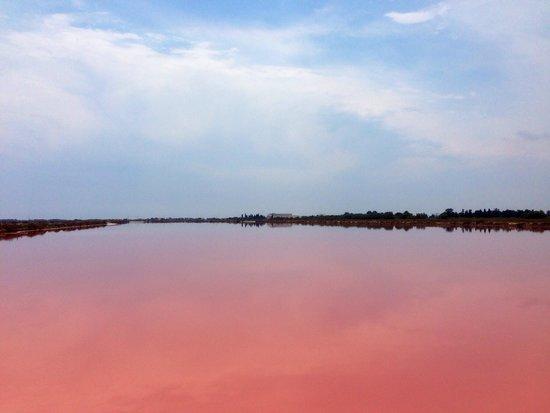 Salin d'Aigues-Mortes : Amoureux de la Camargue ...