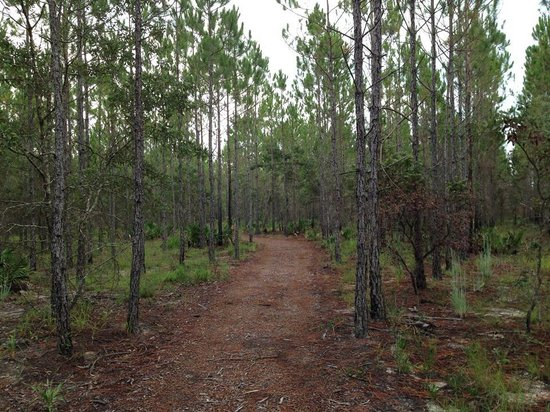 Conservation Park: Osprey Trail Area
