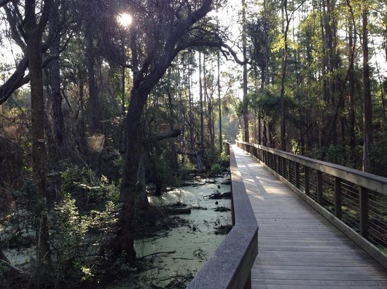 Conservation Park: Boardwalk Near Cypress Pond