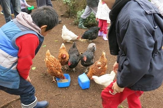 Feeding time in the chook pen at Pump Hill Farm Cottages