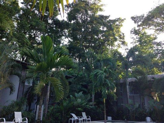 Le Cameleon Boutique Hotel: Selva