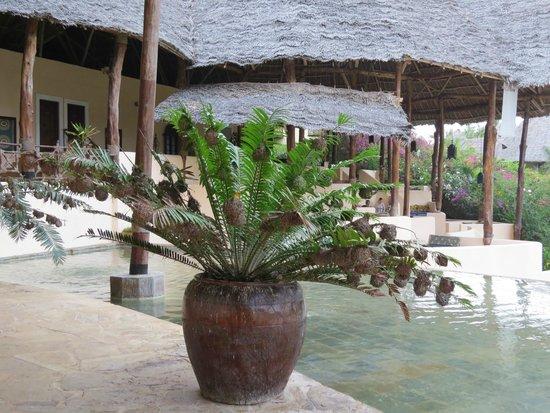 Ocean Paradise Resort & Spa: Здесь при мне поймали ядовитую змею!