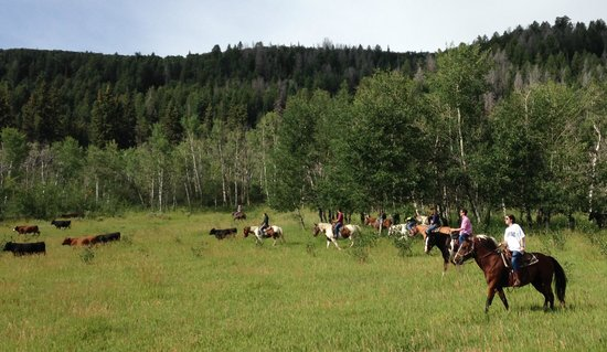 Saddleback Ranch: Beautiful ride Thursday July 24th