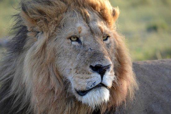 Enkewa Camp: el rey