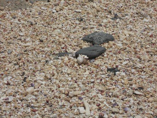LTI Akassia Beach : Bernard :p