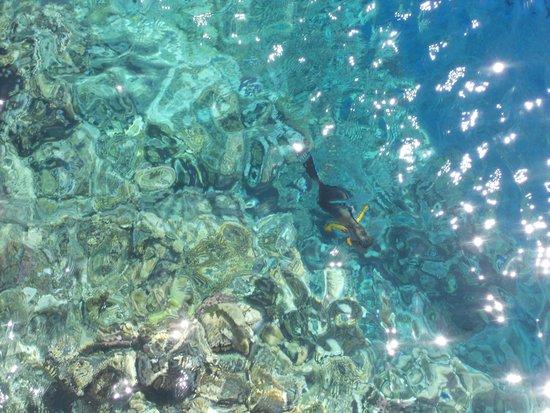 LTI Akassia Beach : La faune et la flore