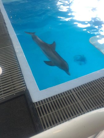 Clearwater Marine Aquarium: Hope