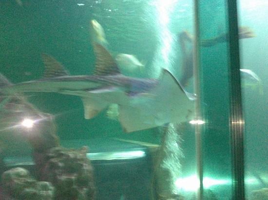 Sea Life Blackpool : Sharks!!