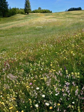 Sporthotel Panorama: wild flowers along hiking trails
