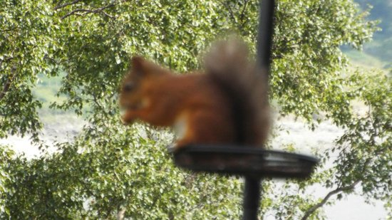 Haweswater Hotel: squirrel