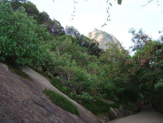 Claudio Coutinho Trail: Vista do Morro do Pão de Açúcar
