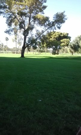 Francisco Grande Golf Course: And the greenest grass in CG!